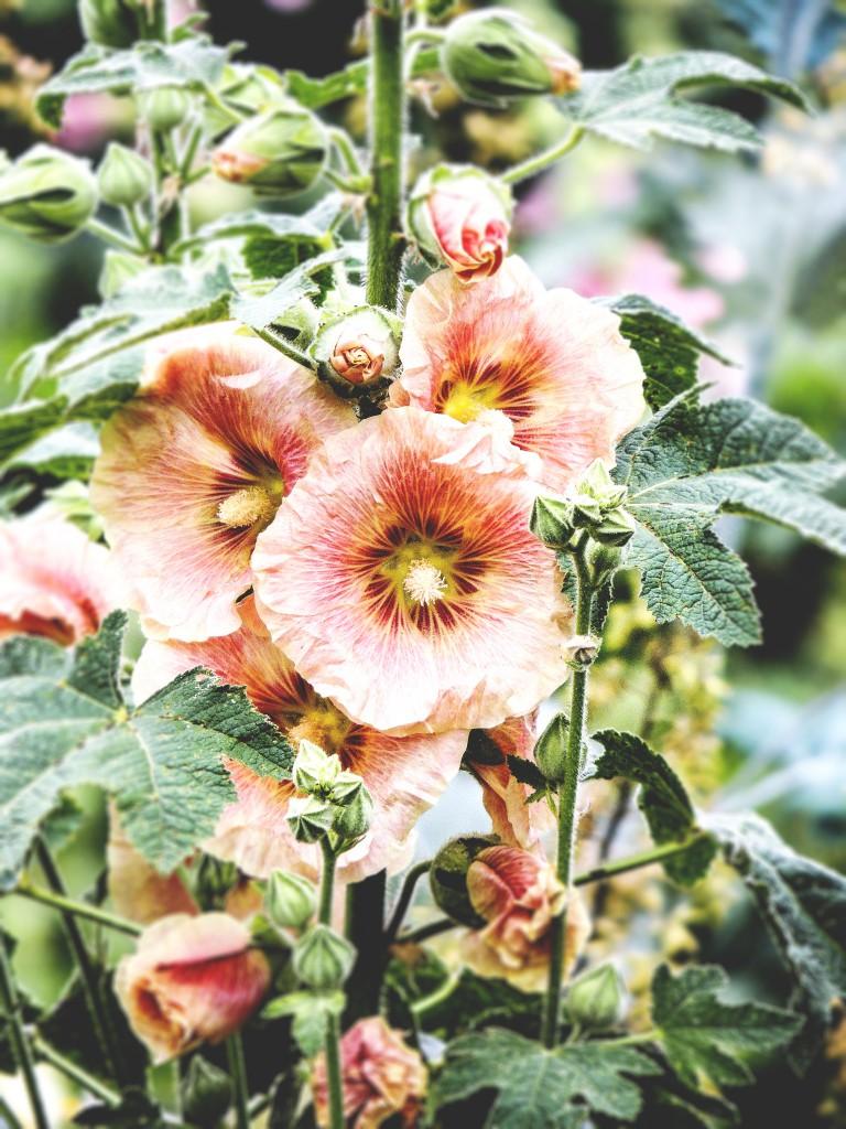 Detail from the Flower Garden