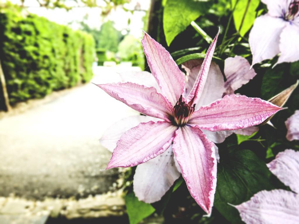 Gorgeous flowers everywhere