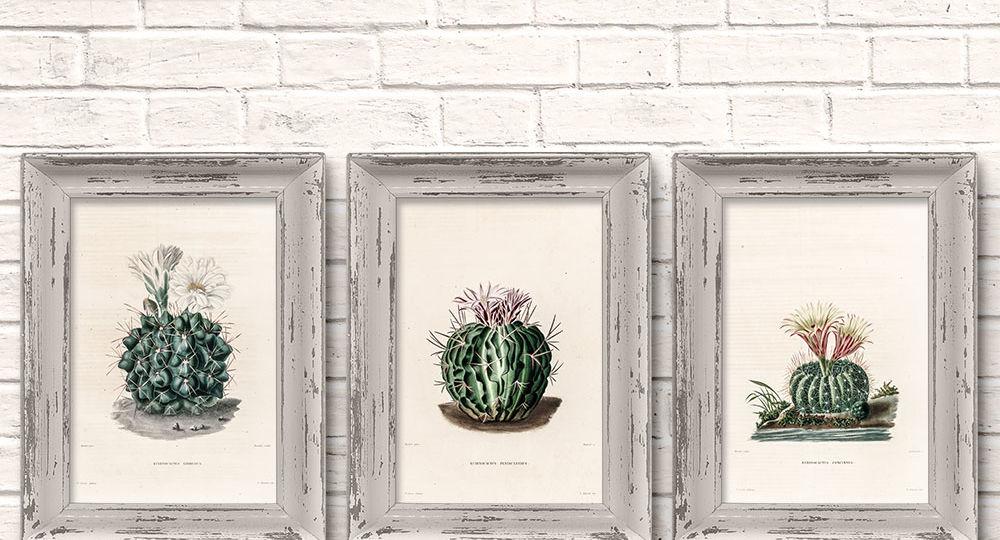 OAWA-PrintableHomeDecor4-Cacti