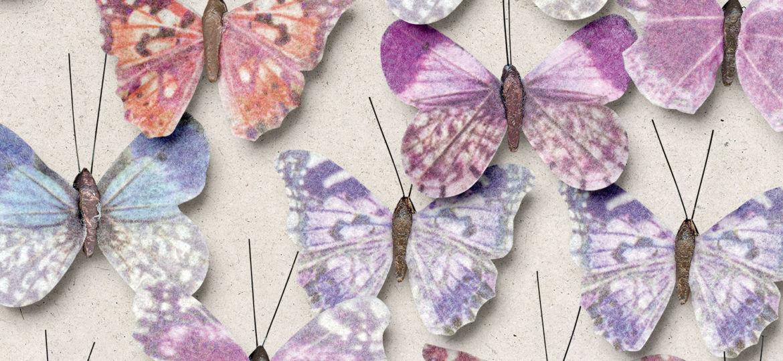 OAWA-CU-ButterfliesNo1-1B